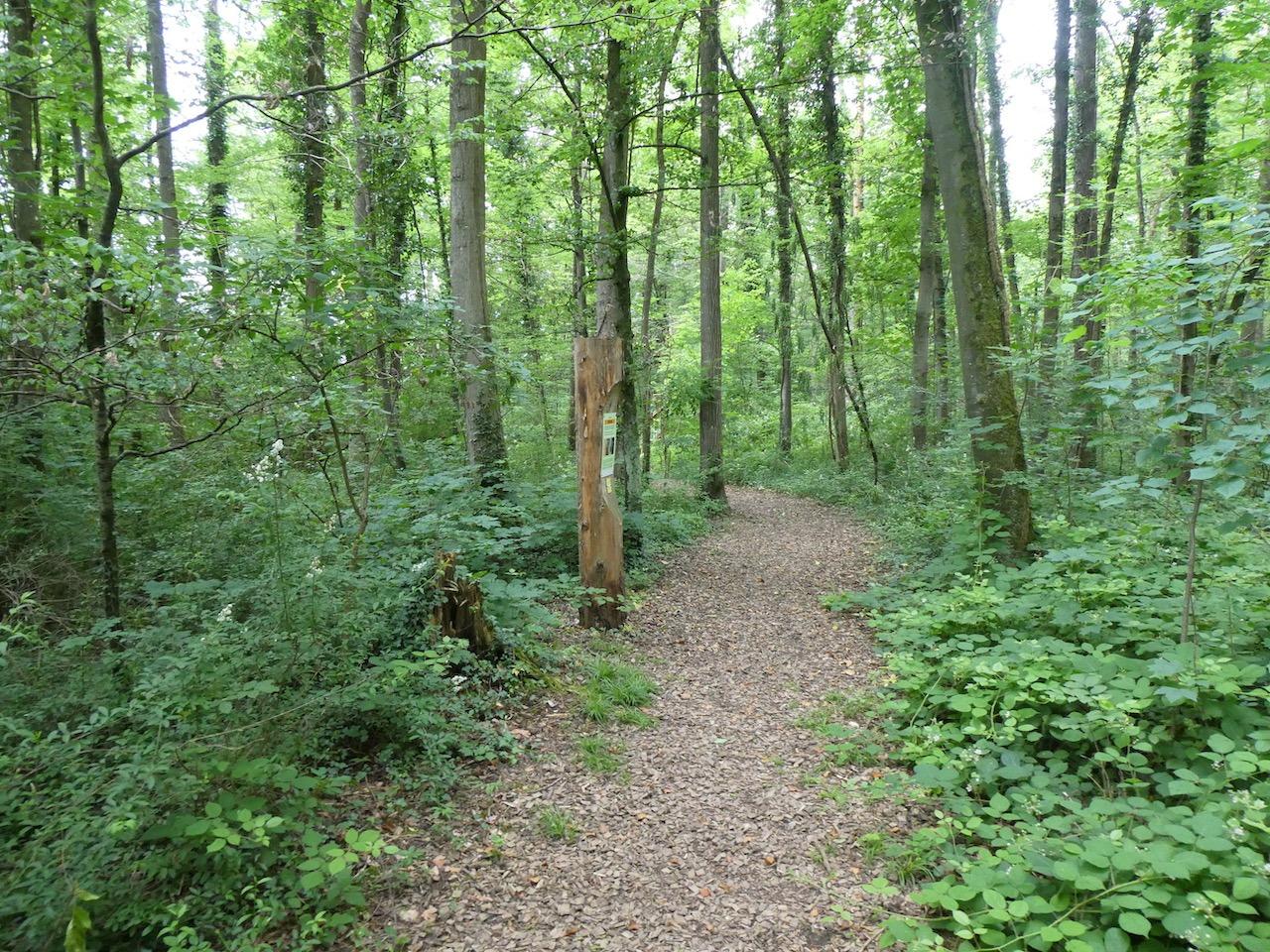 Tag des Waldes 21.3.2021
